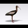 04 30 47 672 ibis5 4