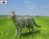 Domestic Cat 3D Model