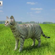 Domestic Cat 3D Model