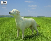 Domestic Dog Labrador Retriever 3D Model