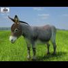 04 34 07 314 donkey 480 0001 4