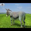 04 34 07 517 donkey 480 0003 4