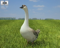 Chinese Goose 3D Model