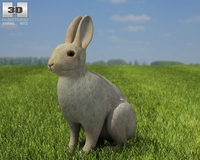 Common Rabbit 3D Model