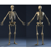 04 34 45 77 bones01 4