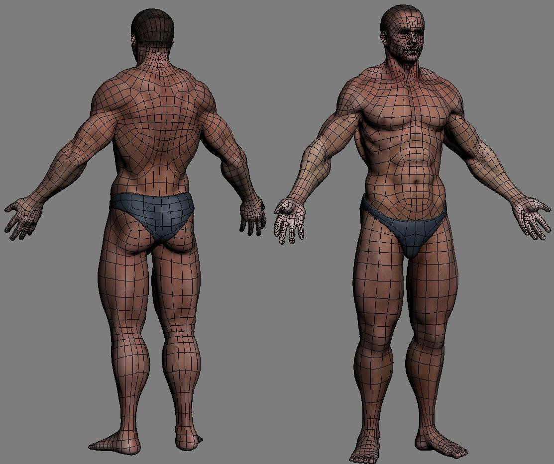 Anatomy Bones And Skin Male 3d Model