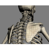 04 35 16 884 wiredetailskeleton 4