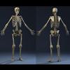 04 35 21 228 bones01 4