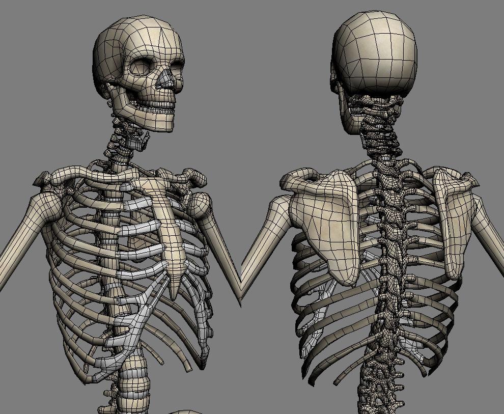 Lowpoly Skeleton (anatomy) 3D Model