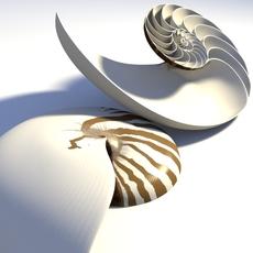 Nautilus Seashell 3D Model