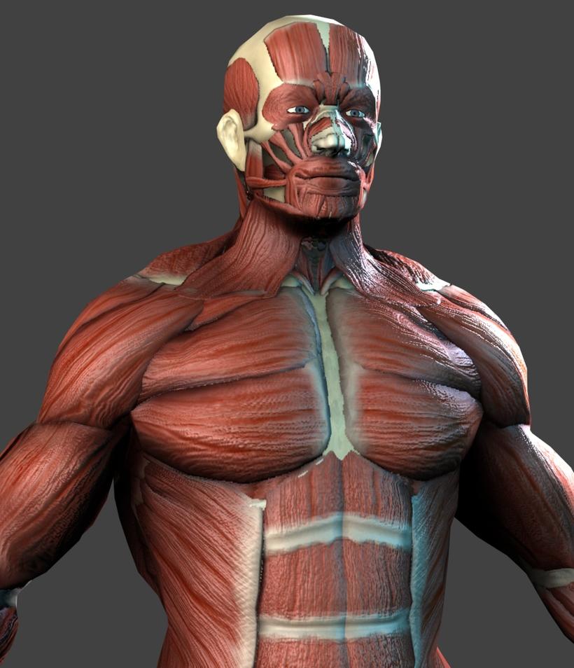 Lowpoly Anatomy Model Muscles Bones 3d Model