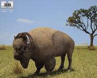 American Bison (Buffalo, Bison Bison) 3D Model