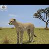05 18 43 867 cheetah 480 0001 4