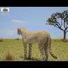 05 18 44 156 cheetah 480 0003 4