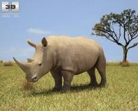 White Rhinoceros (Ceratotherium Simum) 3D Model