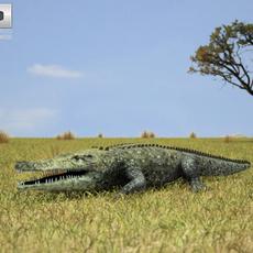 Common Crocodile (Crocodylus Niloticus) 3D Model