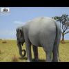 05 22 03 606 asian elephant 480 0003 4
