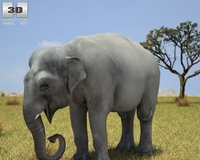 Asian Elephant (Elephas Maximus) 3D Model