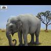05 22 03 95 asian elephant 480 0001 4