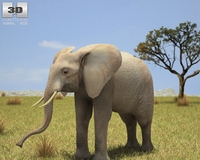 African Elephant (Loxodonta) 3D Model