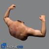 05 43 27 614 male torso 07 4