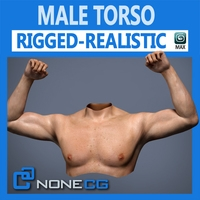 Adult Male Torso Rigged 3D Model