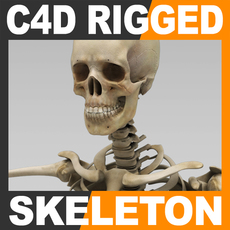 Human Skeleton Cinema 4D Rigged 3D Model