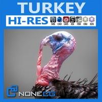 Turkey 3D Model
