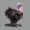 06 13 59 297 turkey 02 4