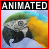 06 17 34 101 parrot 0001 4