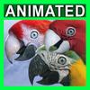 06 17 34 684 parrots 3 4
