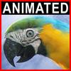 06 17 35 172 parrot 0001 4
