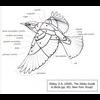 06 19 19 83 birdwingdiagram 4