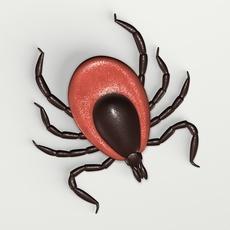 Deer Tick 3D Model