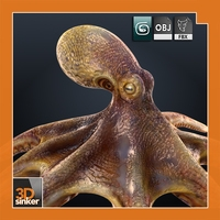 Octopus vulgaris 3D Model
