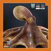 06 32 20 623 sample octopus 1 4