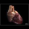 06 33 13 191 heart 05 4