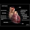 06 33 17 897 heart mroff 4