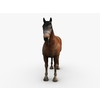 06 33 58 446 009 horseok1ren 4