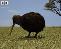 Kiwi (Apteryx Australis) 3D Model