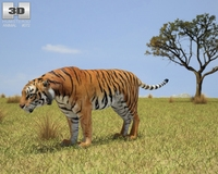 Tiger (Panthera Tigris) 3D Model