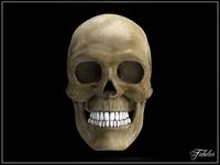 Human skull Vray 3D Model