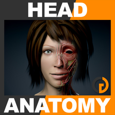 Human Female Head Anatomy 3D Model