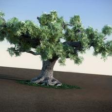 Oak HiPoly tree 3D Model