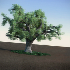 Oak LowPoly tree 3D Model