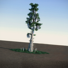 Bald Cypress HiPoly 3D Model
