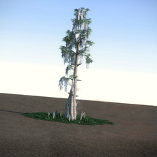 Bald Cypress LowPoly 3D Model
