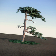 Huangshan welcoming Pine LowPoly 3D Model