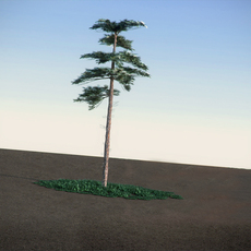Huangshan cuted Pine LowPoly 3D Model