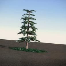 Huangshan Pine LowPoly 3D Model